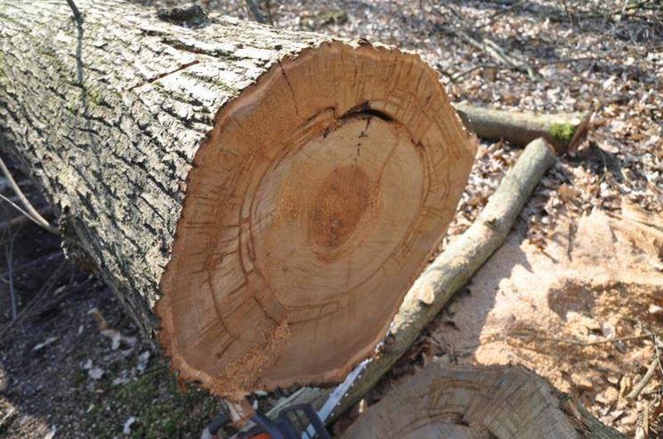 Il tannino nemico o amico creazionedatmosfere for Case in legno difetti